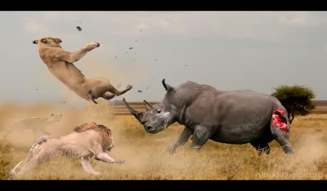 جنگ خونین خفن حیوانات در طبیعت وحشی