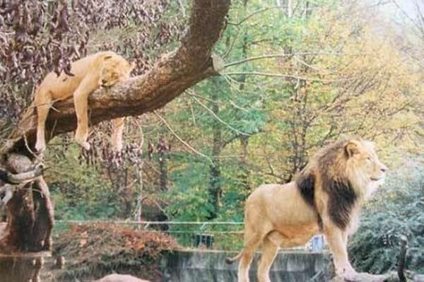 جفت گیری حیوانات مختلف + عکس