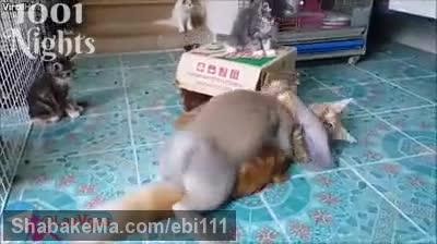 جفت گیری خرگوش با گربه خنده دار و بامزه