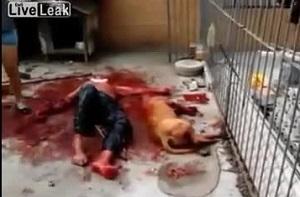 حمله وحشتناک سگ وحشی به انسان