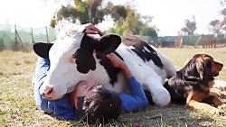 فیلم باورنکردنی خفن از عشق و رفاقت بین انسان و حیوانات
