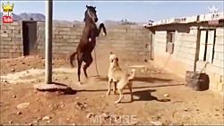 نبرد نژاد های سگ با حیوانات