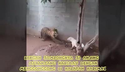جنگ خونین بین ببر با سگ در حیات وحش