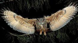 حملههای شبانه جغد به لانه عقابها فیلم
