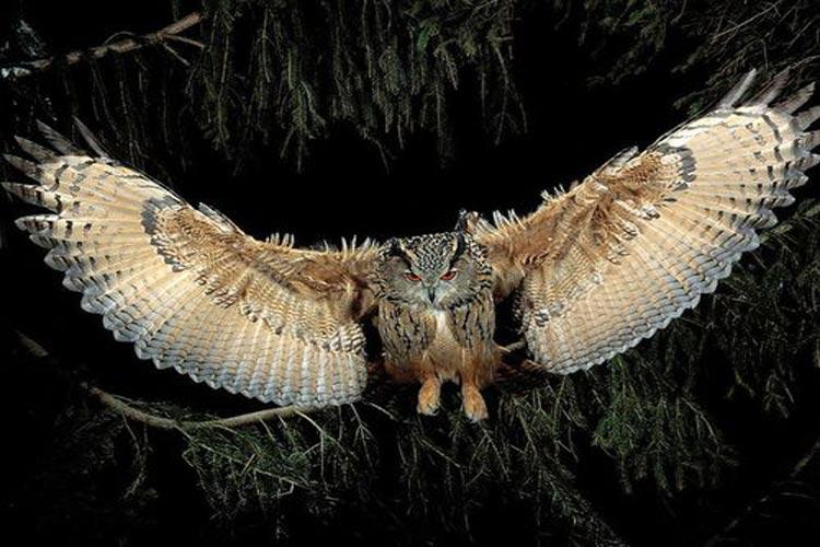 حملههای شبانه جغد به لانه عقابها | فیلم