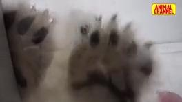 حمله حيوانات وحشي به انسان ها