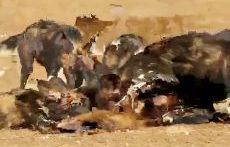 زنده خواری میمون توسط سگهای وحشی