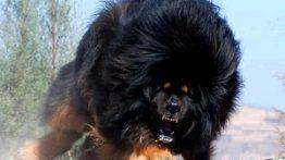 سگ های خطرناک (حیوانات وحشی)