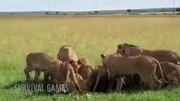 شکار حیوانات وحشی
