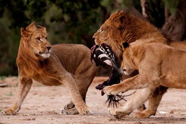 شکار لحظههای جذاب از شکار حیوانات