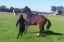 هیچ موقع یه اسب رو اذیت نکنید