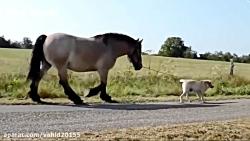 خوشکل ترین اسب های دنیا
