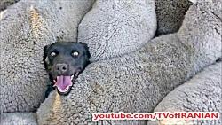 ماجرای عکس سگی که در فضای مجازی غوغا به پا کرد