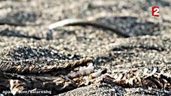 بی رحم ترین مارهای جهان در این نقطه از جهان دره مرگ آمریکای جنوبی