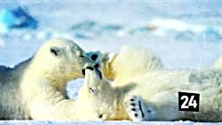 نابودگرترین جانور کره مین چه حیوانی میتونه باشه؟