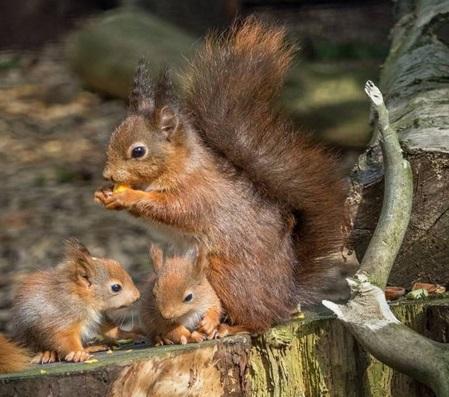 تولید مثل سنجاب ها، زمان و فصل تولید مثل آنها