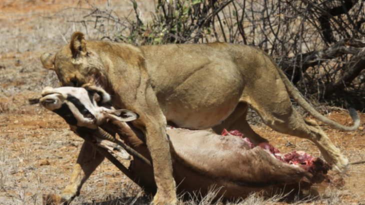 ewaso.kofafeth-oryx-Afrique-Horizons