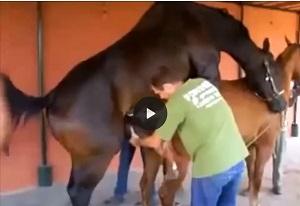 جفتگيري خر با اسب جالب انگیز بین جفت گیری حیوانات