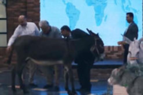 دوشیدن شیر الاغ در برنامه شبکه سه