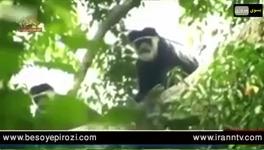 راز بقا حیات وحش آفریقا کنگو