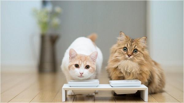 زمان-جفت-گیری-برای-گربه-ها