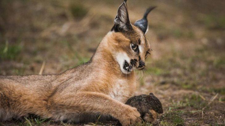 صحنههای برگزیده شکار در حیات وحش فیلم