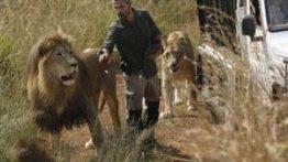 عشق بازی مرد شکارچی با شیرهای درنده نر و ماده + تصاویر
