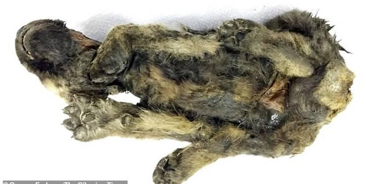 کشف جسد ۱۸ هزار ساله یک سگ +عکس