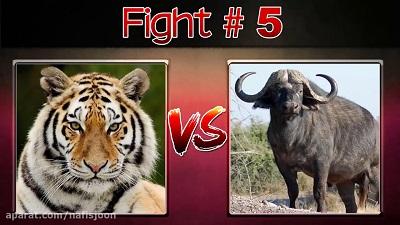گلچین جنگ خونین حیوانات وحشی در حیات وحش تا مرگ