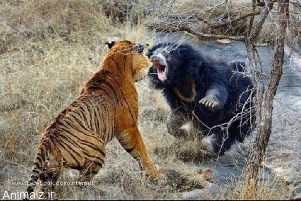 جنگ-حیوانات-2