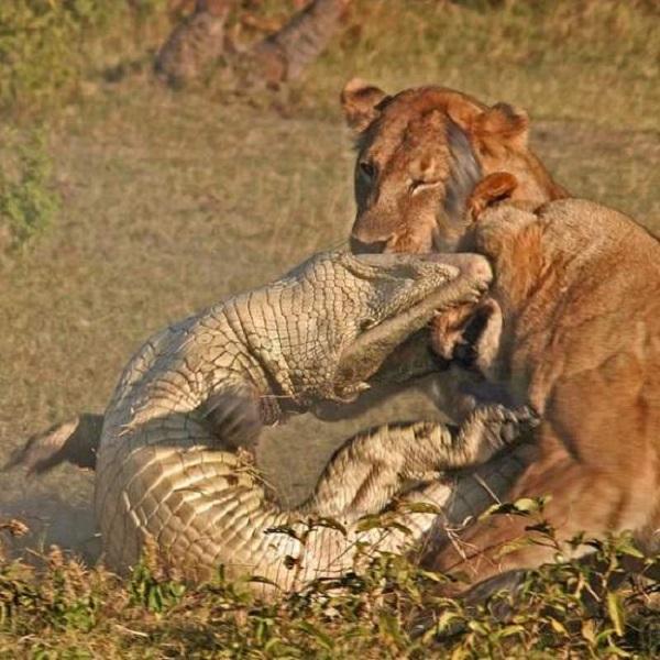 عکسهای جنگ حیوانات Animal War