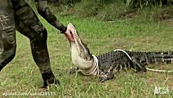 شکار خطرناک کروکودیل Dangerous crocodile hunting