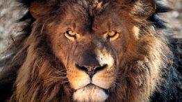 شیر ، باغ وحش ، نگهبان باغ وحش