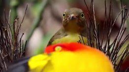 مستند جفت گیری غیر معمول حیوانات در طبیعت