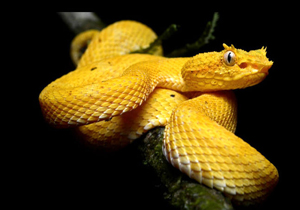 10 RAREST Snakes In The World (1)