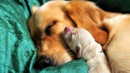 جفتگیری توله سگ دیوث با بابای خودش (1)
