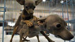 جفت گیری حیوانات animals mating (3)
