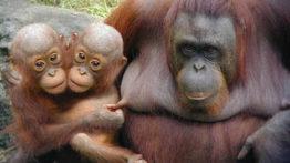 حیوانات دو سر عجیب (1)