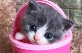 دنیای شیزین بچه گربه ها