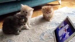 گربه های کیوت