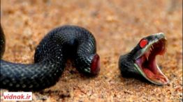 10 Animals That Can Live After Death
