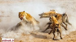 10 rough scenes of the most scary animal hunting (1)