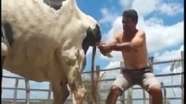 Birth of a cow