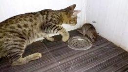 CAT EATS MOUSE ALIVE