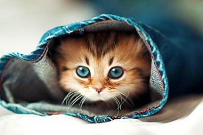 Funny kitten (1)