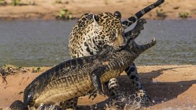 تصاویر شکار حیوانات وحشی در حیات وحش