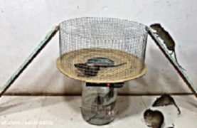 Mouse Trap – Easy Mouse Trap