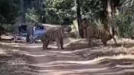 Terrible scene that frightened tourists of the wildlife park