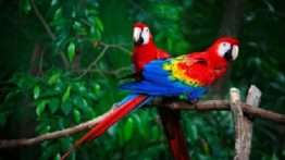 The coolest parrots in the world