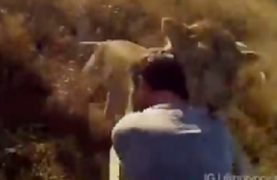 The most beautiful video you have ever seen of human and animal love